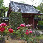 千葉・東福寺の門と牡丹