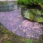 東福寺の花筏