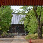 葉桜の東福寺