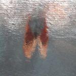 窓ガラスから覗く秋の蝉