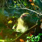 鹿島槍山麓の猿