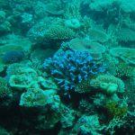 オーストラリアの珊瑚礁